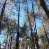 Aprueban préstamo de 15 millones de dólares para reforestar al Urabá